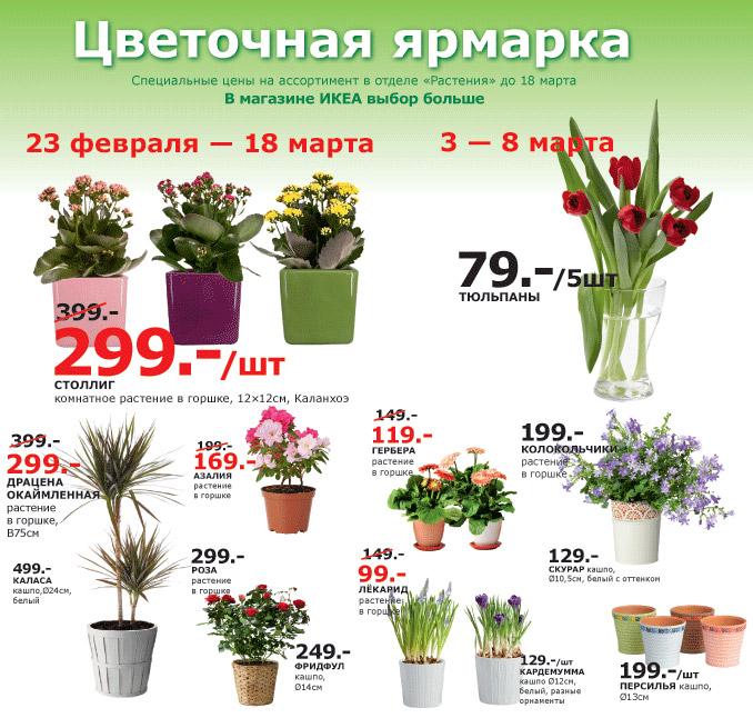 Ашан цветы в горшках
